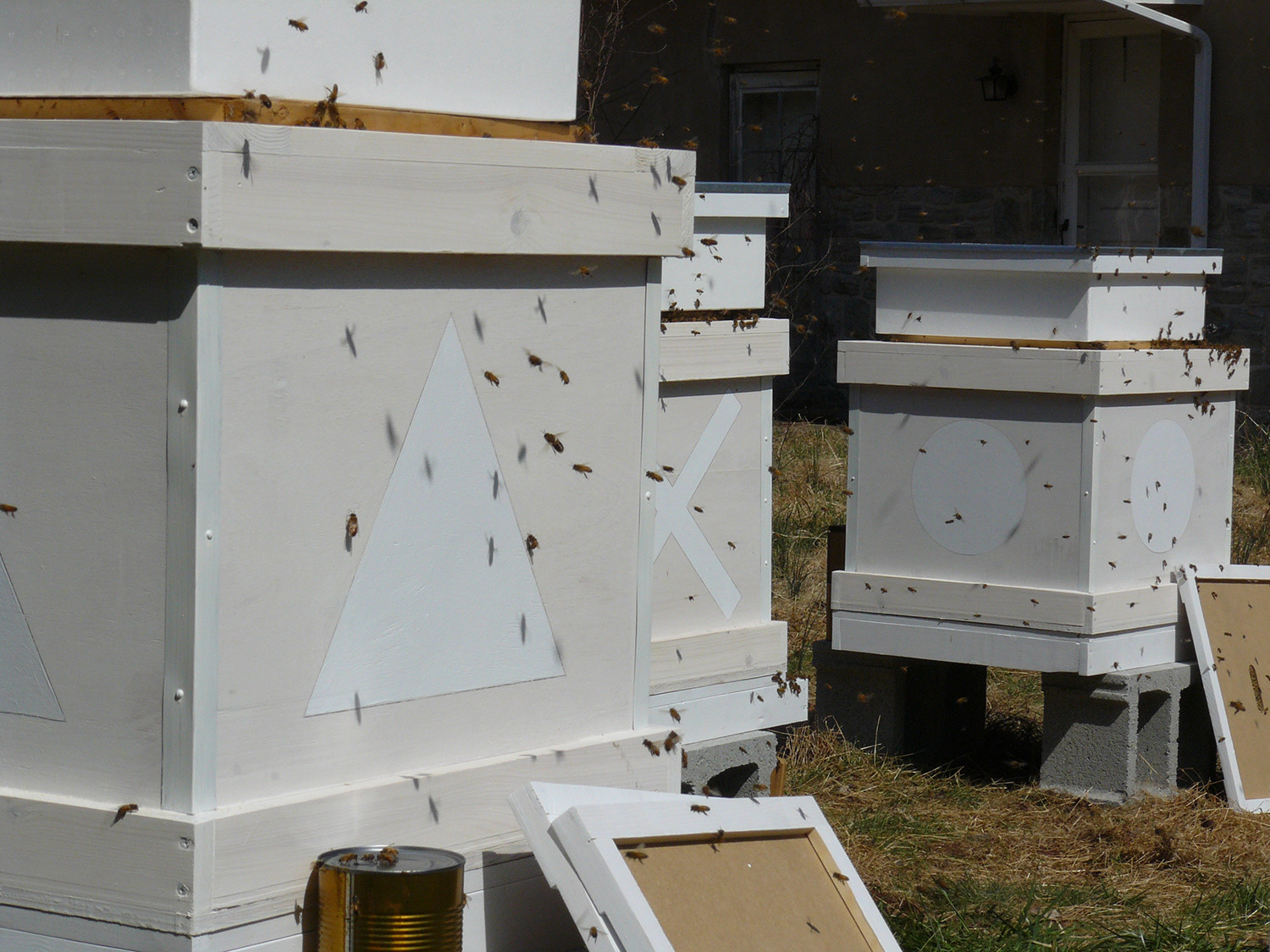 Programmed Hives (works in progress)
